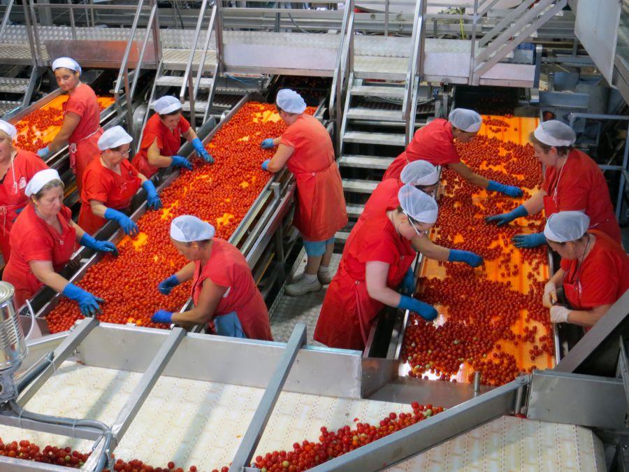 processo produttivo selezione pomodorini